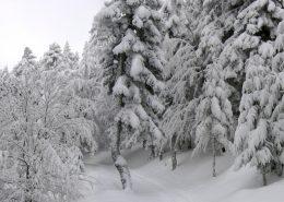les engelures en hiver