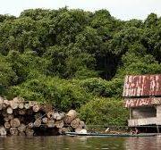 Indonésie: bois agarwood à Kalimantan